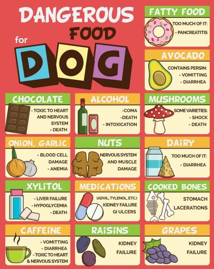Food Infographic Best Dog Food Our Favorite Dog Food Brands
