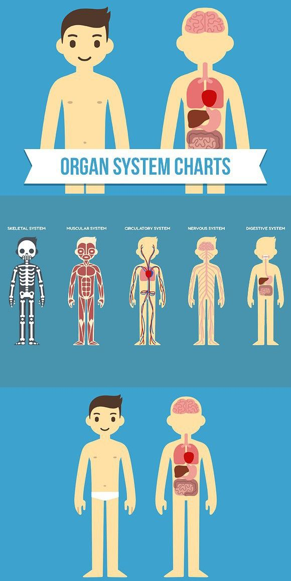 Medical infographic : Human anatomy charts. Medical Infographic ...